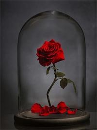 roseglass1.png