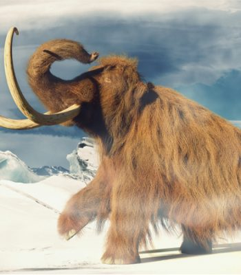 Profile picture of Hrafn